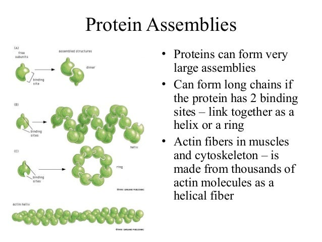 What Do Proteins Have To Do With Natural Selection