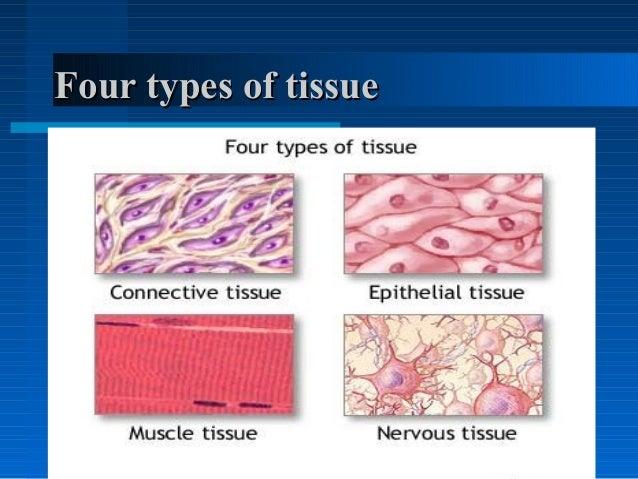 Principles of tissue diagnosis