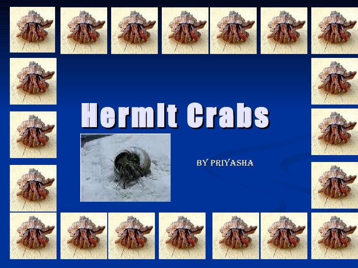Hermit Crabs By Priyasha