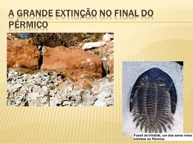  Briozoários   Braquiópodes   Crinóides