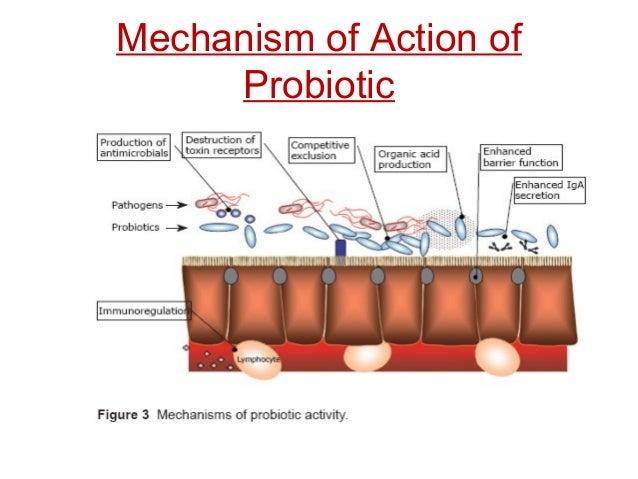 Mechanism of Action of Probiotic