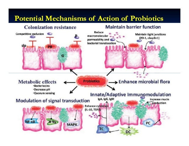 Potential Mechanisms of Action of ProbioticsPotential Mechanisms of Action of Probiotics