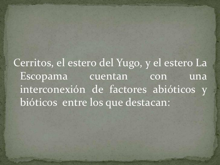 Cerritos, el estero del Yugo, y el estero La Escopama cuentan con una interconexión de factores abióticos y bióticos  entr...