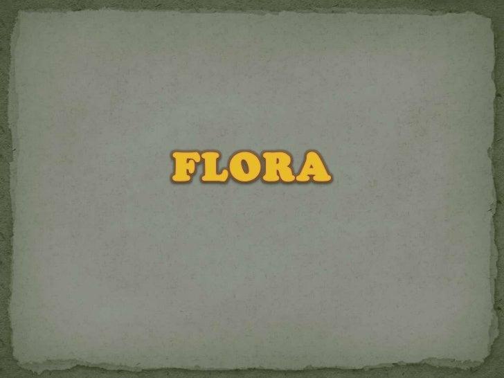 FLORA<br />