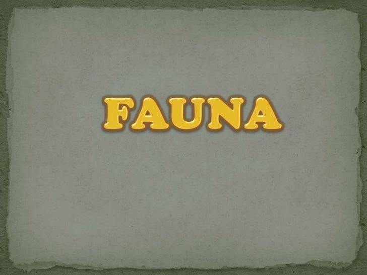 FAUNA<br />