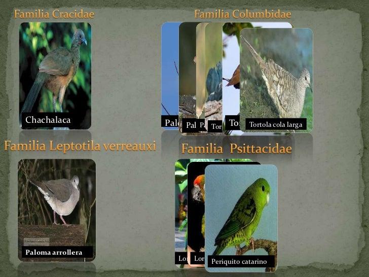 Familia Cracidae<br />Familia Columbidae<br />Familia Leptotila verreauxi<br />Familia  Psittacidae<br />Paloma arroller...