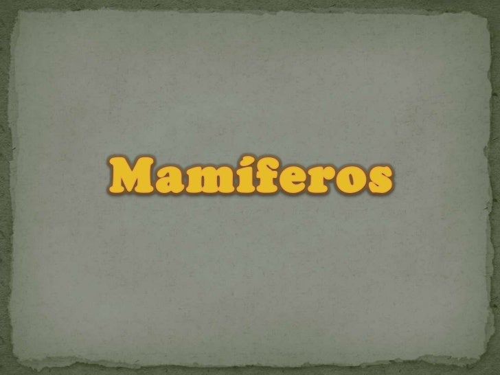 Mamíferos<br />