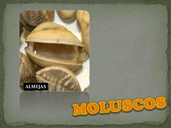 ALMEJAS<br />MOLUSCOS<br />