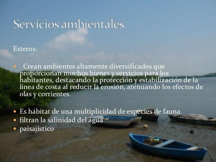 Esteros:<br />  Crean ambientes altamente diversificados que proporcionan muchos bienes y servicios para los habitantes, d...