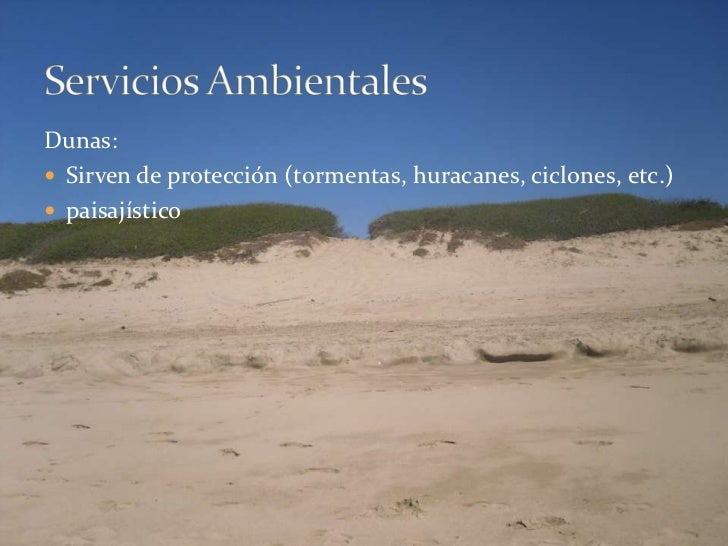 Dunas:<br />Sirven de protección (tormentas, huracanes, ciclones, etc.)<br />paisajístico<br />Servicios Ambientales<br />