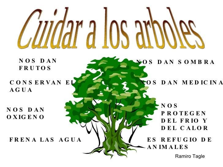 Problemas y soluciones1 for Arboles que dan sombra para jardin