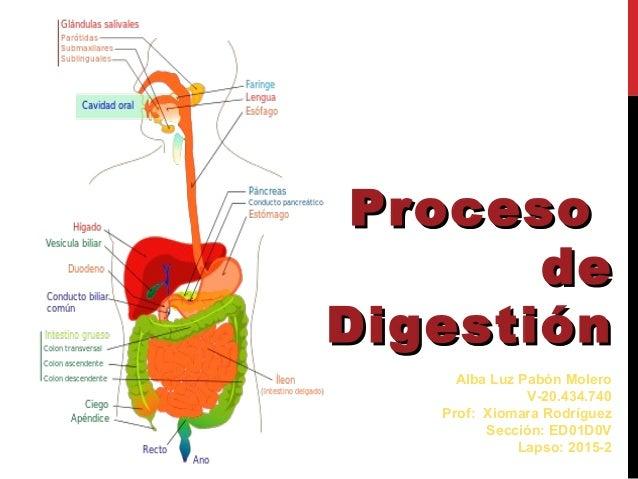 Proceso de digestion