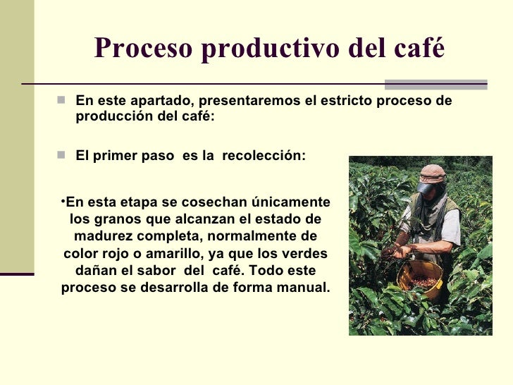 Proceso del cafe for Descripcion del proceso de produccion