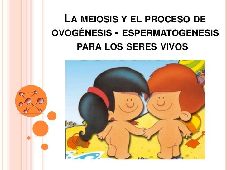 LA MEIOSIS Y EL PROCESO DEOVOGÉNESIS - ESPERMATOGENESIS    PARA LOS SERES VIVOS