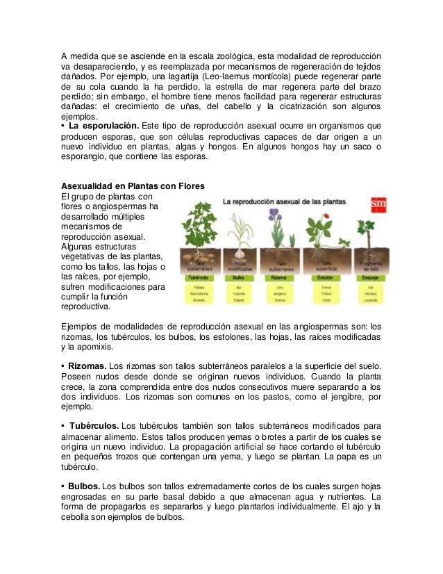 Proceso reproductivo asexual de los vegetales