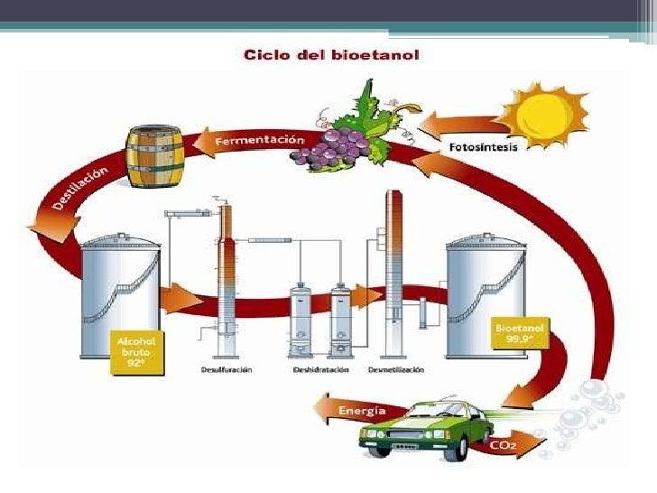 Proceso productivo del vino (1) Slide 2