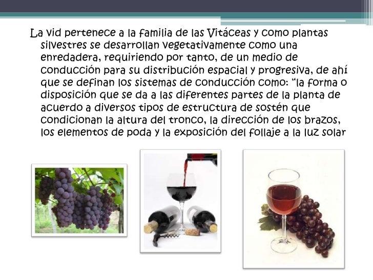 Proceso productivo del vino (1) Slide 3