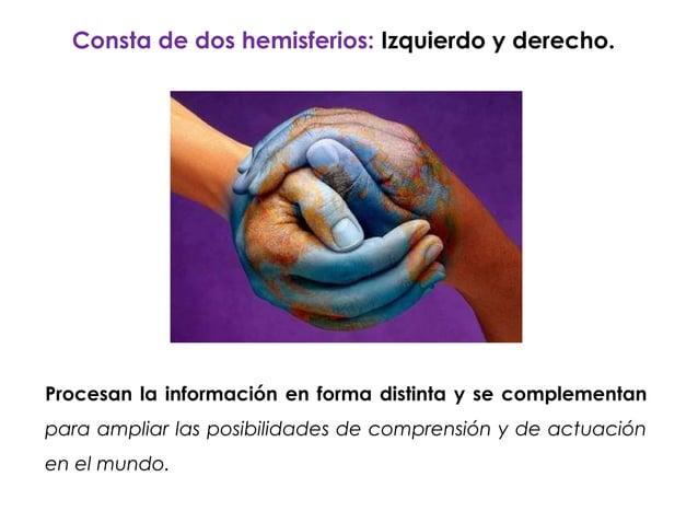 Consta de dos hemisferios: Izquierdo y derecho.Procesan la información en forma distinta y se complementanpara ampliar las...