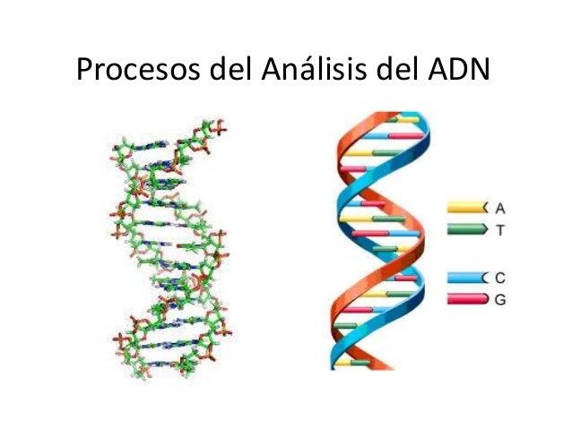 Procesos De Análisis Del ADN
