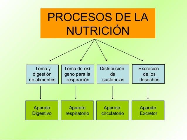 PROCESOS DE LA          NUTRICIÓN   Toma y      Toma de oxí-   Distribución   Excreción digestión     geno para la        ...