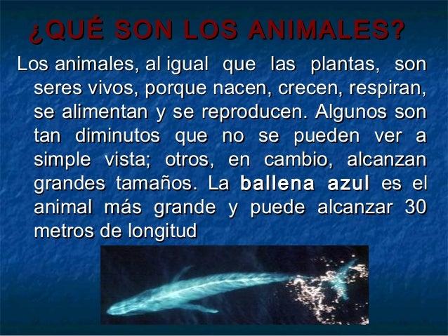 Ballena azul reproduccion asexual de las plantas