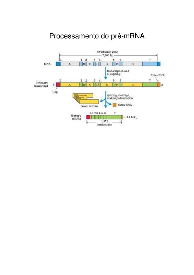 Processamento do pré-mRNA