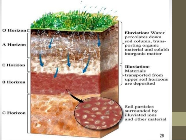 Processes involved in soil formation for Explain the formation of soil