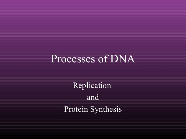Processes of DNA Replication and Protein Synthesis