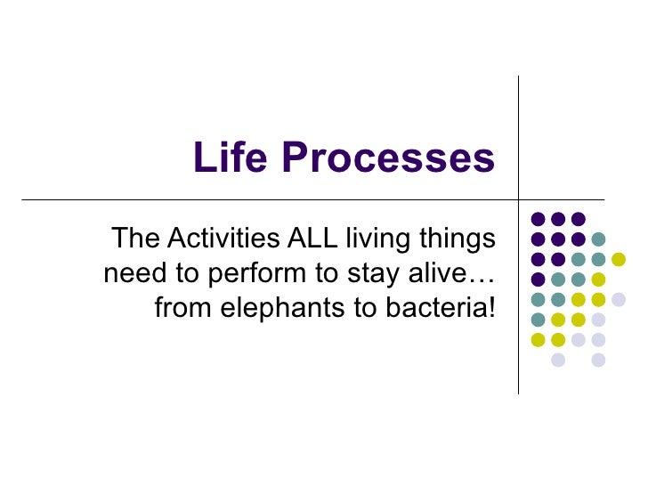 Life Processes The Activities ALL living things need to perform to stay alive… from elephants to bacteria!