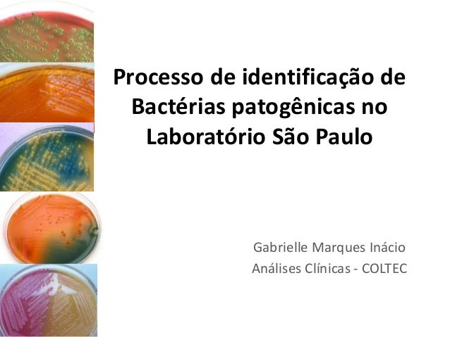 Processo de identificação de Bactérias patogênicas no Laboratório São Paulo Gabrielle Marques Inácio Análises Clínicas - C...