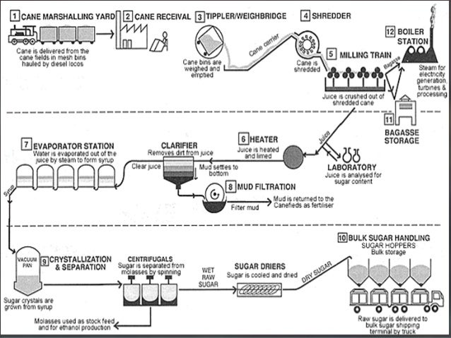 Process of sugar production from sugarcane sugar factory.