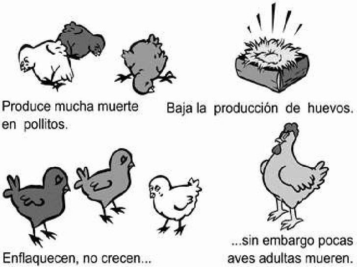 Resultado de imagen para viruela aviar