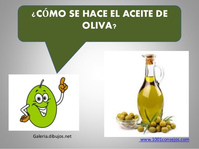 Producci n del aceite de oliva - Como sacar aceite del piso ...