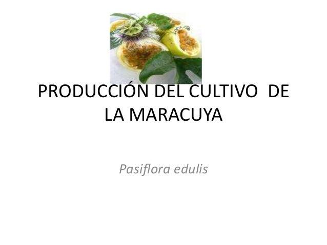PRODUCCIÓN DEL CULTIVO DE LA MARACUYA Pasiflora edulis