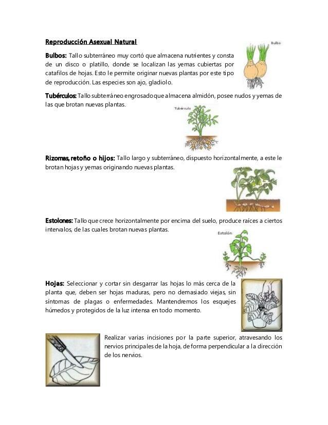 Estolones reproduccion asexual plantas de jardin