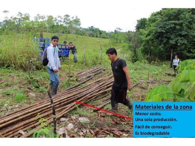 Producci n de plantones forestales en viveros volantes for Produccion de viveros