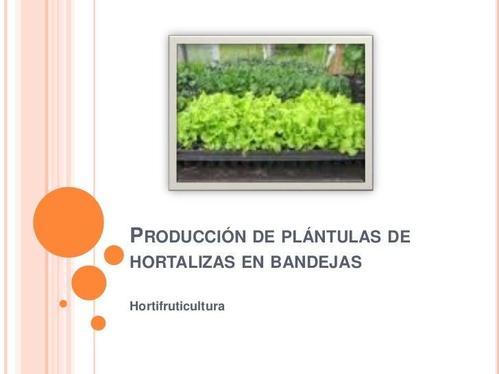 Producción de plántulas de hortalizas en bandejas<br />Hortifruticultura<br />