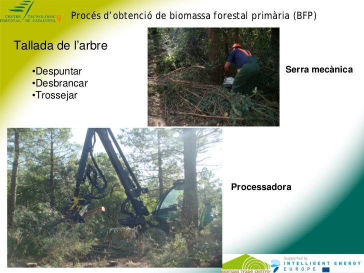 Procés d'obtenció de biomassa forestal primària (BFP)Tallada de l'arbre   •Despuntar                                      ...