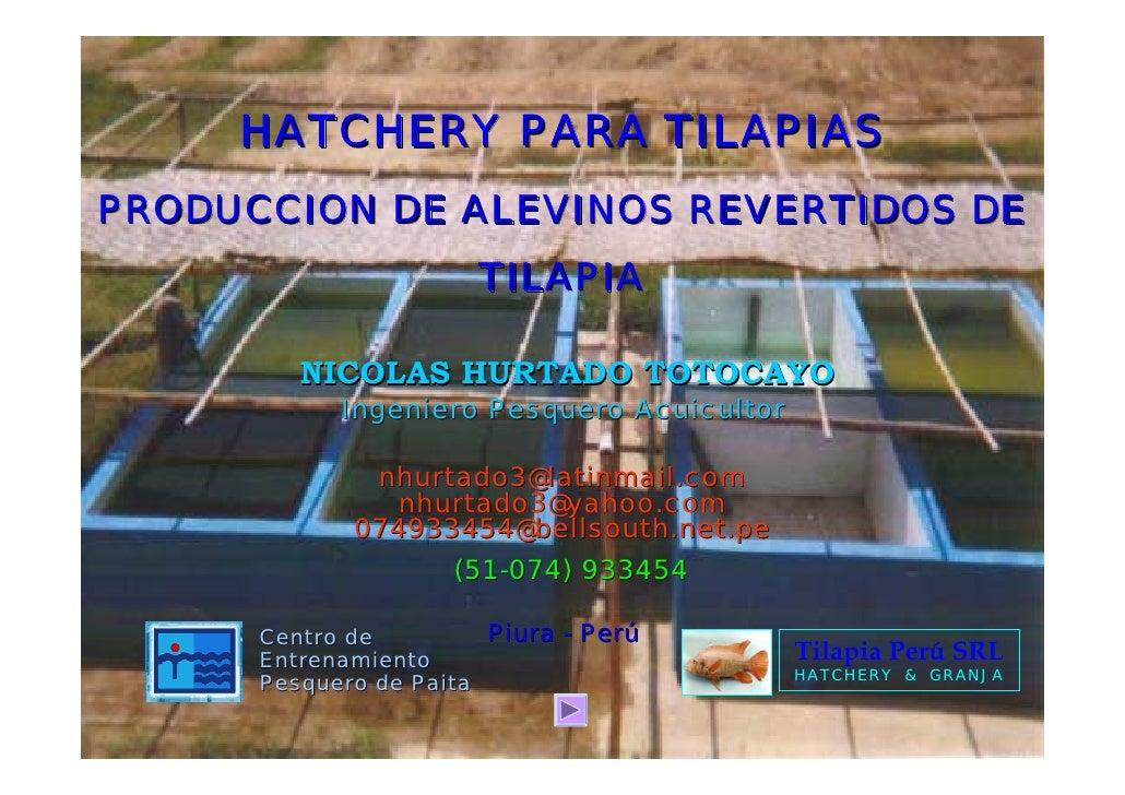 HATCHERY PARA TILAPIASPRODUCCION DE ALEVINOS REVERTIDOS DE                       TILAPIA         NICOLAS HURTADO TOTOCAYO ...