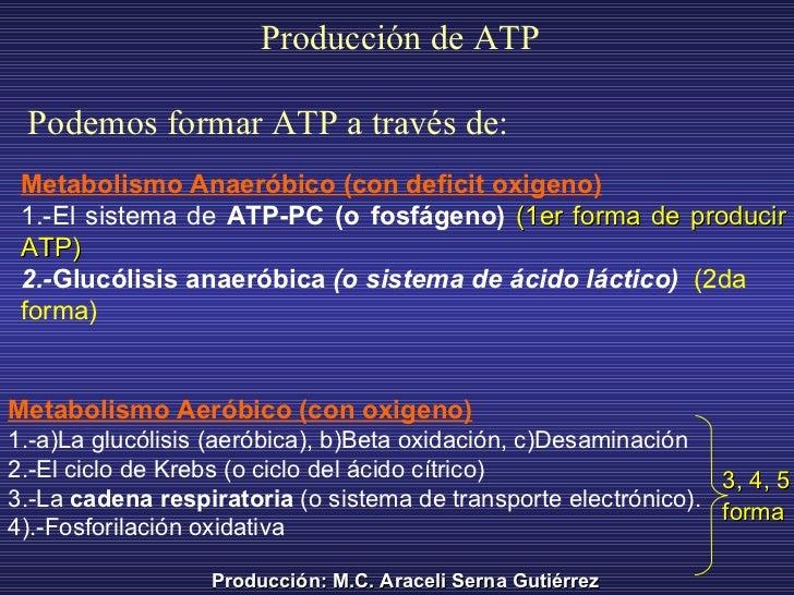 Metabolismo Anaeróbico (con deficit oxigeno)   1.-E l sistema de  ATP-PC (o fosfágeno)   (1er forma de producir ATP) 2.- G...