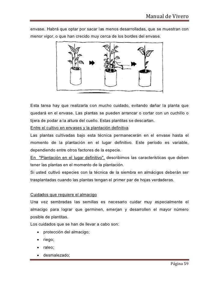 Produccion de plantas ornamentales for Concepto de plantas ornamentales
