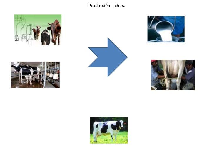 Producción lechera<br />