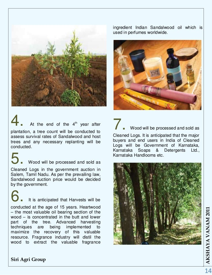 Sandalwood Tree Price
