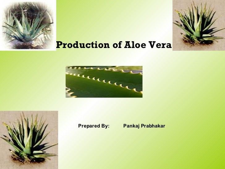 Production of Aloe Vera Prepared By: Pankaj Prabhakar
