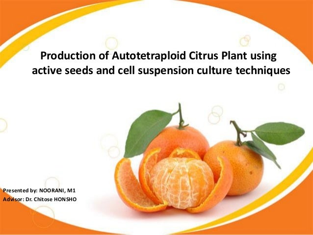 Production of Autotetraploid Citrus Plant using active seeds and cell suspension culture techniques  Presented by: NOORANI...