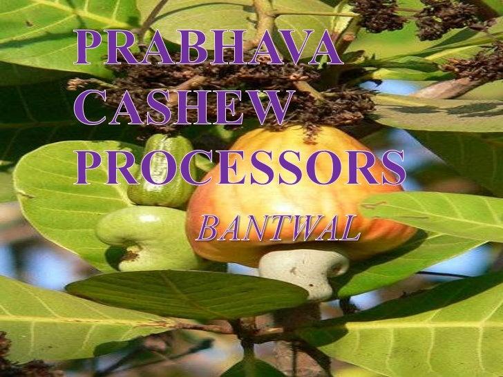  PRABHAVA CASHEW PROCESSORS: Belongs to Srinivas Group of Industries Proprietor: M Vedhavyasa Prabhu 2nd cashew factor...