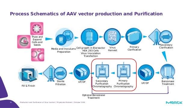 31 Process Schematics Of AAV Vector Production