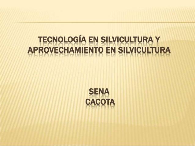 TECNOLOGÍA EN SILVICULTURA Y APROVECHAMIENTO EN SILVICULTURA  SENA CACOTA