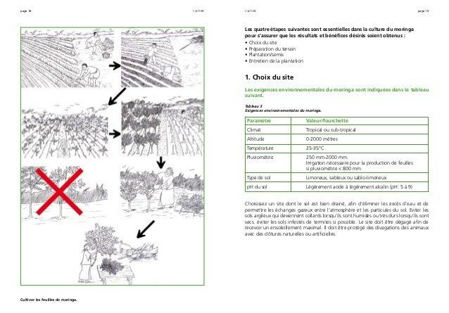 page 18 page 19 Cultiver les feuilles de moringa. culture Les quatre étapes suivantes sont essentielles dans la culture du...