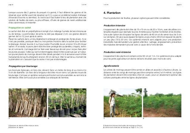 page 22 page 23 Lorsque aucune des 2 graines du poquet n'a germé, il faut déterrer les graines et les observer pour vérifi...